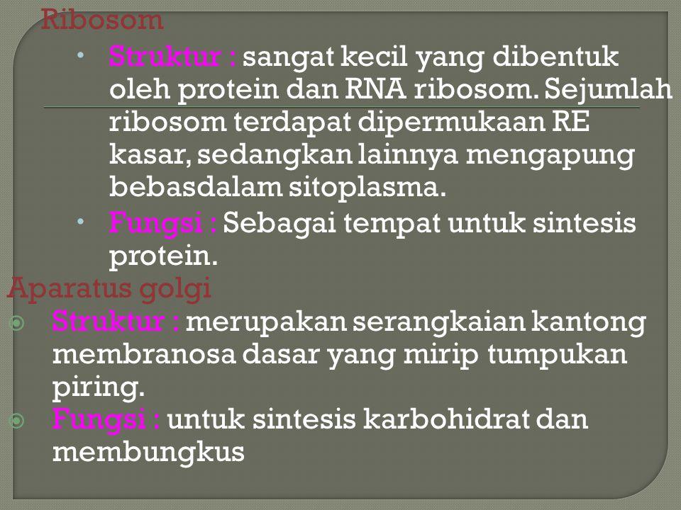 Ribosom  Struktur : sangat kecil yang dibentuk oleh protein dan RNA ribosom. Sejumlah ribosom terdapat dipermukaan RE kasar, sedangkan lainnya mengap