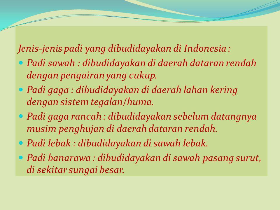 Jenis-jenis padi yang dibudidayakan di Indonesia : Padi sawah : dibudidayakan di daerah dataran rendah dengan pengairan yang cukup. Padi gaga : dibudi
