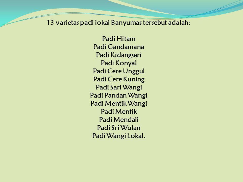 13 varietas padi lokal Banyumas tersebut adalah: Padi Hitam Padi Gandamana Padi Kidangsari Padi Konyal Padi Cere Unggul Padi Cere Kuning Padi Sari Wan