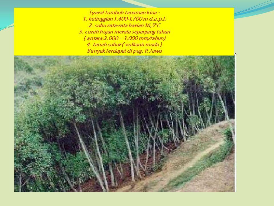 Syarat tumbuh tanaman kina : 1. ketinggian 1.400-1.700 m d.a.p.l. 2. suhu rata-rata harian 16,5°C 3. curah hujan merata sepanjang tahun ( antara 2.000