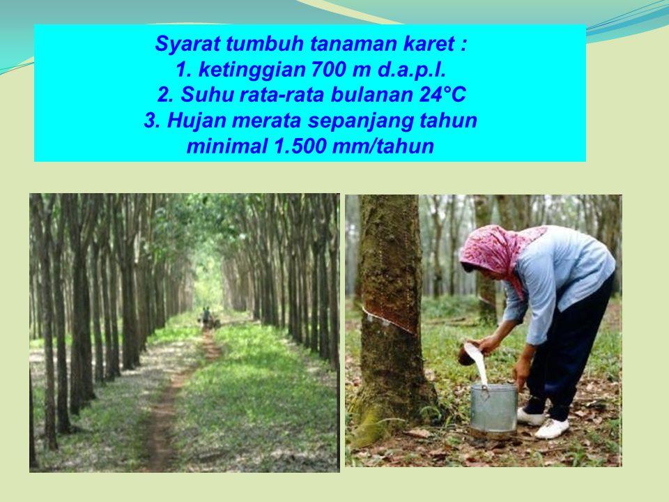 Syarat tumbuh tanaman karet : 1. ketinggian 700 m d.a.p.l. 2. Suhu rata-rata bulanan 24°C 3. Hujan merata sepanjang tahun minimal 1.500 mm/tahun