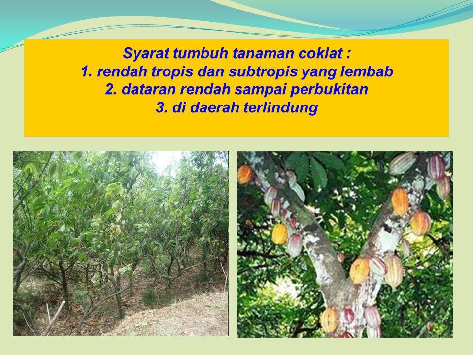 Syarat tumbuh tanaman coklat : 1. rendah tropis dan subtropis yang lembab 2. dataran rendah sampai perbukitan 3. di daerah terlindung