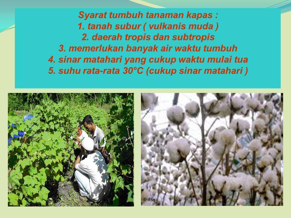 Syarat tumbuh tanaman kapas : 1. tanah subur ( vulkanis muda ) 2. daerah tropis dan subtropis 3. memerlukan banyak air waktu tumbuh 4. sinar matahari