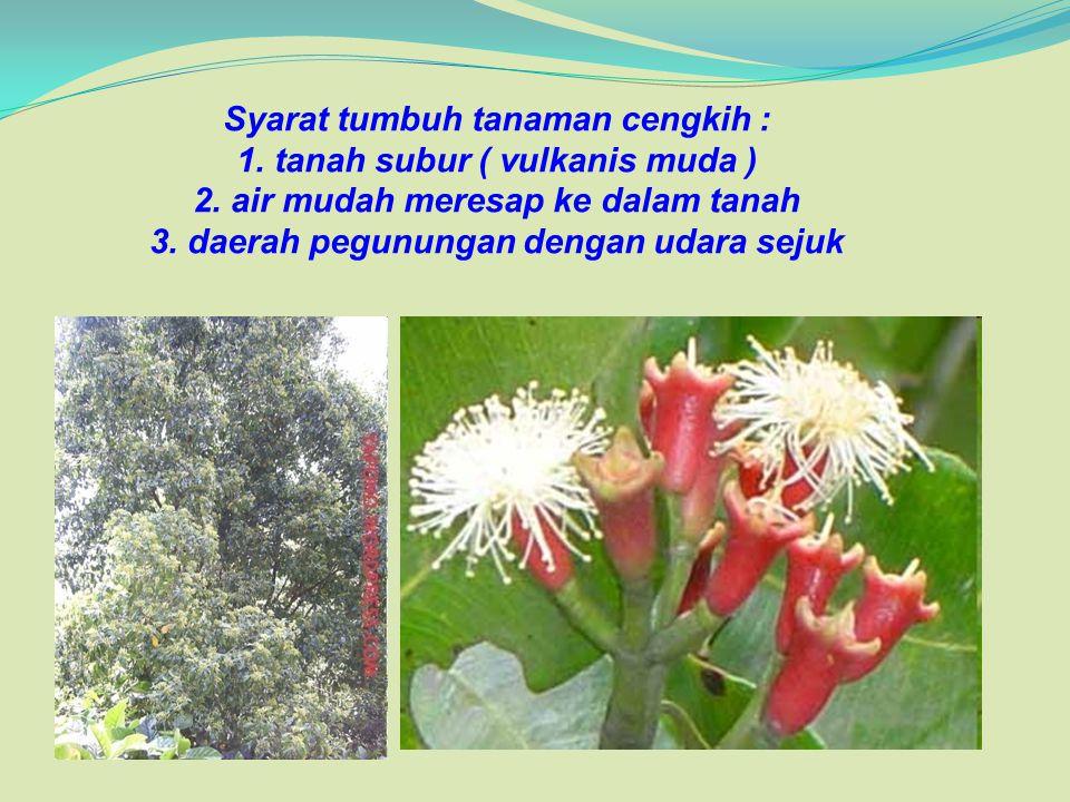 Syarat tumbuh tanaman cengkih : 1. tanah subur ( vulkanis muda ) 2. air mudah meresap ke dalam tanah 3. daerah pegunungan dengan udara sejuk