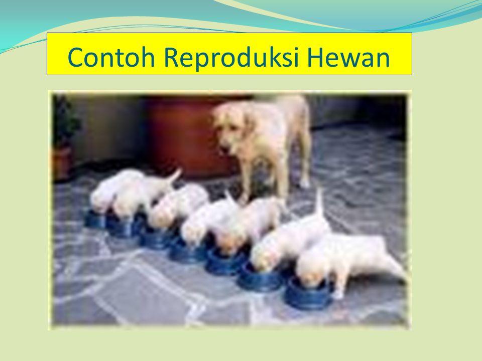 **)Komoditas Pertanian Padi.Syarat tumbuhnya tanaman padi : 1.