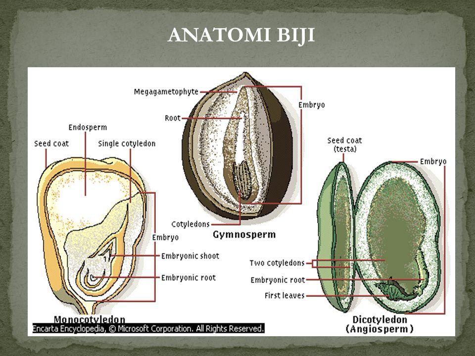 Alat perkembangbiakan generatif Ada 3 bagian: 1. Kulit Biji (spermodermis) - Pada Angiospermae (tumbuhan biji tertutup), biji memiliki 2 lapisan, yait