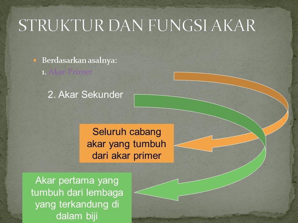 Buah terdiri dari lapisan luar (kulit), lapisan tengah dan lapisan dalam Pada buah kelapa: - lapisan luar (kulit): tipis dan mengkilat - lapisan tengah: sabut - lapisan dalam: tempurung Pada buah mangga: - lapisan luar: kulit - lapisan tengah: bagian manis yang kita makan - lapisan dalam: tipis, keras dan liat Durian, rambutan, manggis, duku = tangkai biji yang tumbuh menyelubungi biji menjadi jaringan yang tebal berdaging dan manis rasanya
