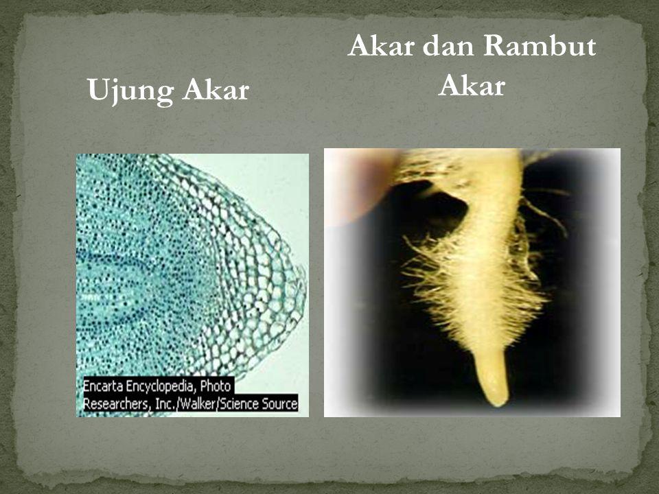 BAGIAN-BAGIAN BUNGA Mahkota Benang sari Tangkai sari Kepala Putik Tangkai Putik Kelopak