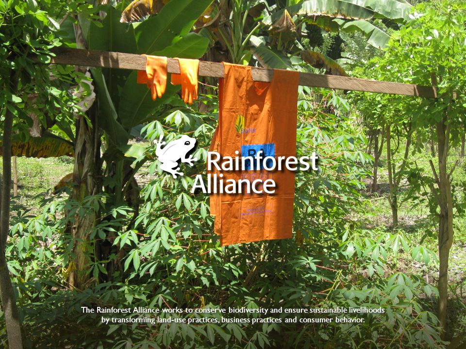 The Rainforest Alliance works to conserve biodiversity and ensure sustainable livelihoods by transforming land-use practices, business practices and consumer behavior.