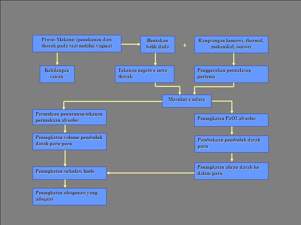 Hentakan balik dada Proses Mekanis (penekanan dari thorak pada saat melalui vagina) Rangsangan kimiawi, thermal, mekanikal, sensori Penggerakan pernafasan pertama Tekanan negative intra thorak Kehilangan cairan Permulaan penurunan tekanan permukaan alveolus Peningkatan PaO2 alveolus Peningkatan volume pembuluh darah paru-paru Peningkatan sirkulasi limfe Peningkatan aliran darah ke dalam paru Pembukaan pembuluh darah paru Peningkatan oksigenasi yang adequat + Masuknya udara