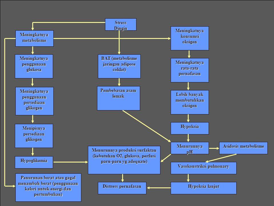 Meningkatnya konsumsi oksigen BAT (metabolisme jaringan adipose coklat) Pembebasan asam lemak Meningkatnya rata-rata pernafasan Lebih banyak membutuhkan oksigen Hypoksia Meningkatnya metabolisme Meningkatnya penggunaan glukosa Meningkatnya penggunaan persediaan glikogen Menipisnya persediaan glikogen Hypoglikemia Penurunan berat atau gagal menambah berat (penggunaan kalori untuk energi dan pertumbuhan) Menurunnya pH Vasokonstriksi pulmonary Hypoksia lanjut Asidosis metabolisme Menurunnya produksi surfaktan (kebutuhan O2, glukosa, perfusi paru-paru yg adequate) Distress pernafasan Stress Dingin