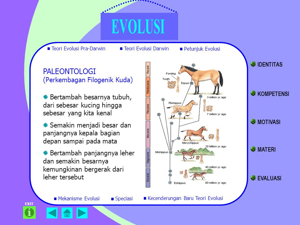 PALEONTOLOGI (Perkembagan Filogenik Kuda) Bertambah besarnya tubuh, dari sebesar kucing hingga sebesar yang kita kenal Semakin menjadi besar dan panja