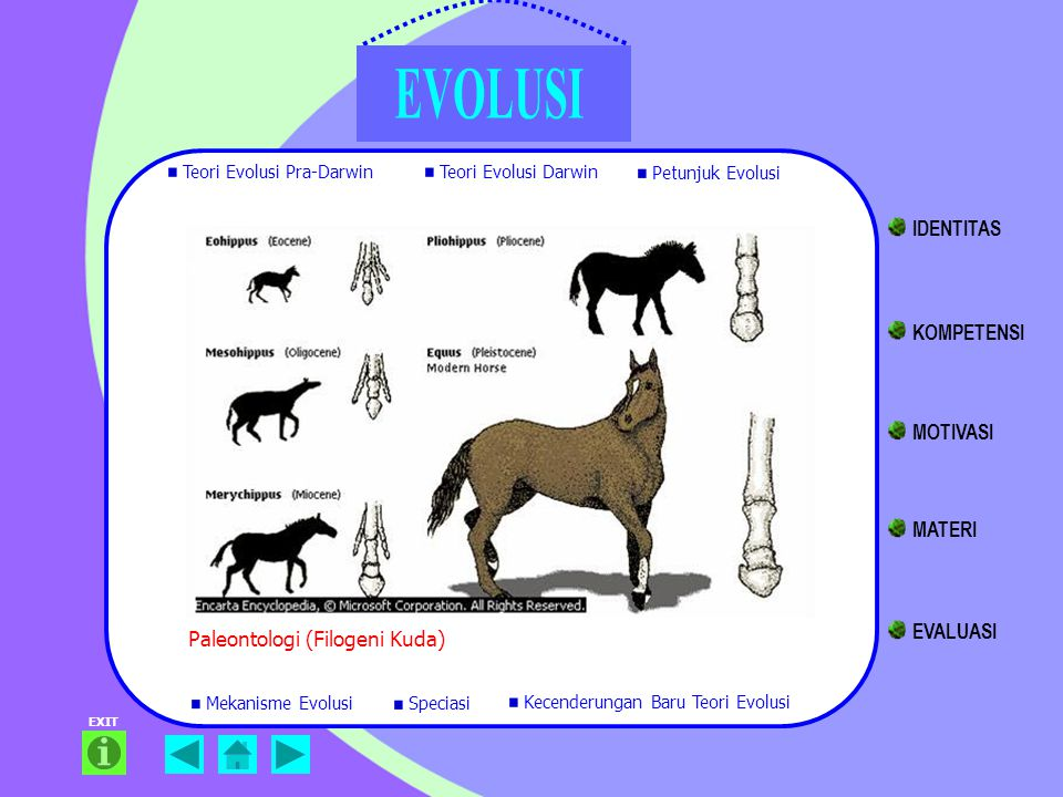 Paleontologi (Filogeni Kuda) EXIT Teori Evolusi Pra-Darwin Teori Evolusi Darwin Petunjuk Evolusi Mekanisme Evolusi Kecenderungan Baru Teori Evolusi Sp