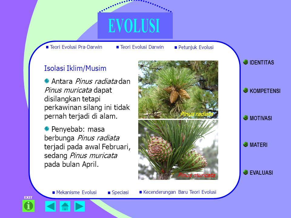 EXIT Isolasi Iklim/Musim Antara Pinus radiata dan Pinus muricata dapat disilangkan tetapi perkawinan silang ini tidak pernah terjadi di alam. Penyebab
