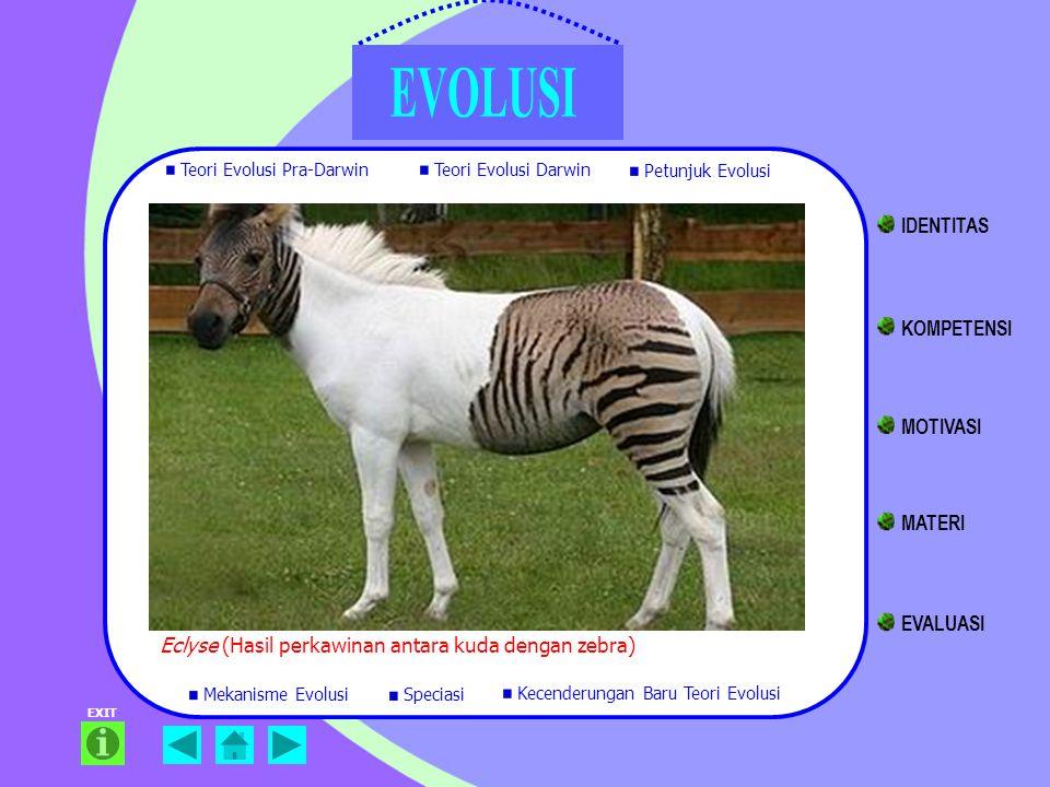 EXIT Eclyse (Hasil perkawinan antara kuda dengan zebra) Teori Evolusi Pra-Darwin Teori Evolusi Darwin Petunjuk Evolusi Mekanisme Evolusi Kecenderungan