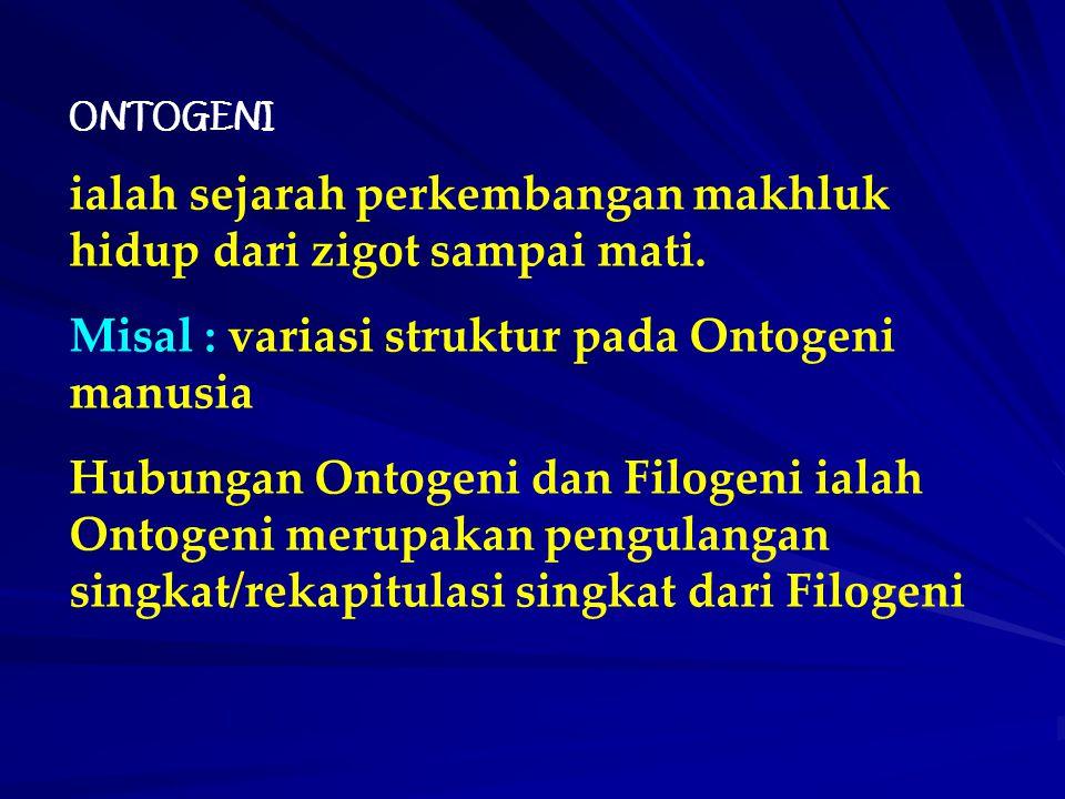 ONTOGENI ialah sejarah perkembangan makhluk hidup dari zigot sampai mati. Misal : variasi struktur pada Ontogeni manusia Hubungan Ontogeni dan Filogen