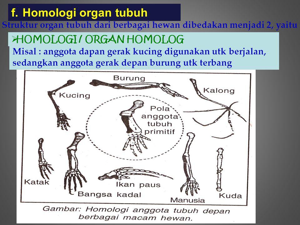 f.Homologi organ tubuh Struktur organ tubuh dari berbagai hewan dibedakan menjadi 2, yaitu  HOMOLOGI / ORGAN HOMOLOG Misal : anggota dapan gerak kuci