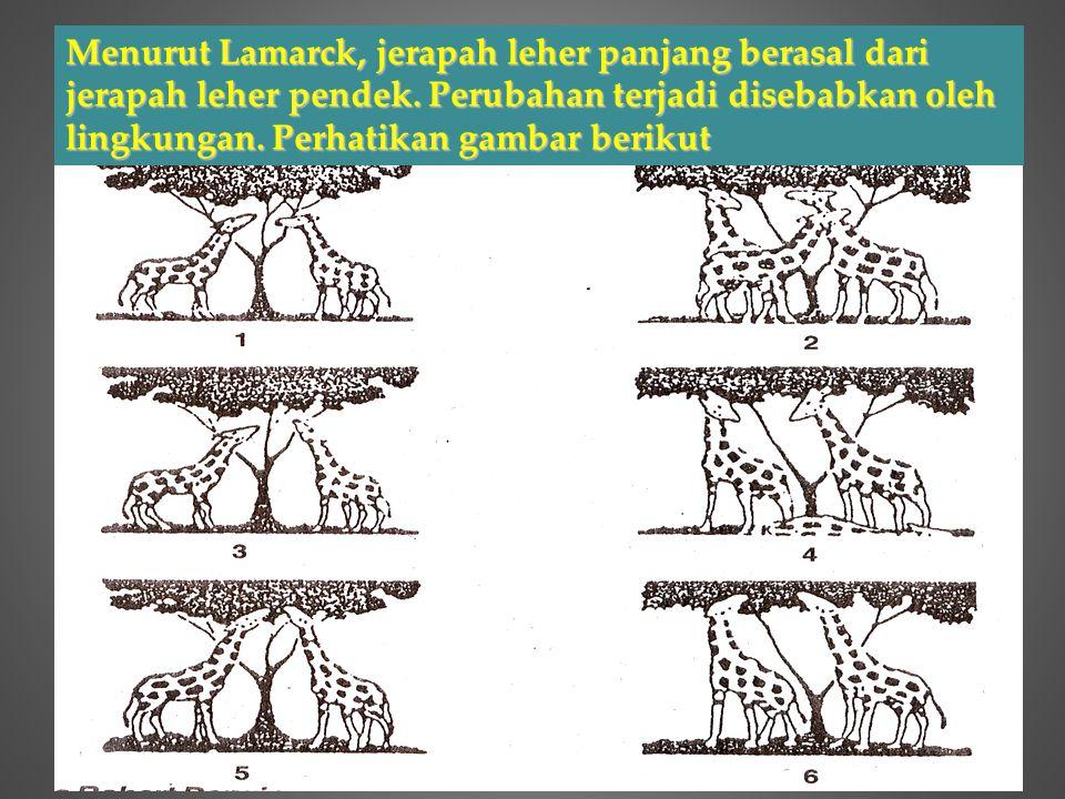 Menurut Lamarck, jerapah leher panjang berasal dari jerapah leher pendek. Perubahan terjadi disebabkan oleh lingkungan. Perhatikan gambar berikut