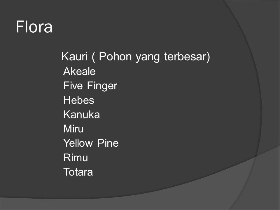 Flora Kauri ( Pohon yang terbesar) Akeale Five Finger Hebes Kanuka Miru Yellow Pine Rimu Totara