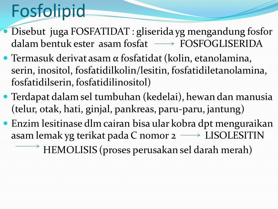 Fosfolipid Disebut juga FOSFATIDAT : gliserida yg mengandung fosfor dalam bentuk ester asam fosfat FOSFOGLISERIDA Termasuk derivat asam α fosfatidat (kolin, etanolamina, serin, inositol, fosfatidilkolin/lesitin, fosfatidiletanolamina, fosfatidilserin, fosfatidilinositol) Terdapat dalam sel tumbuhan (kedelai), hewan dan manusia (telur, otak, hati, ginjal, pankreas, paru-paru, jantung) Enzim lesitinase dlm cairan bisa ular kobra dpt menguraikan asam lemak yg terikat pada C nomor 2 LISOLESITIN HEMOLISIS (proses perusakan sel darah merah)