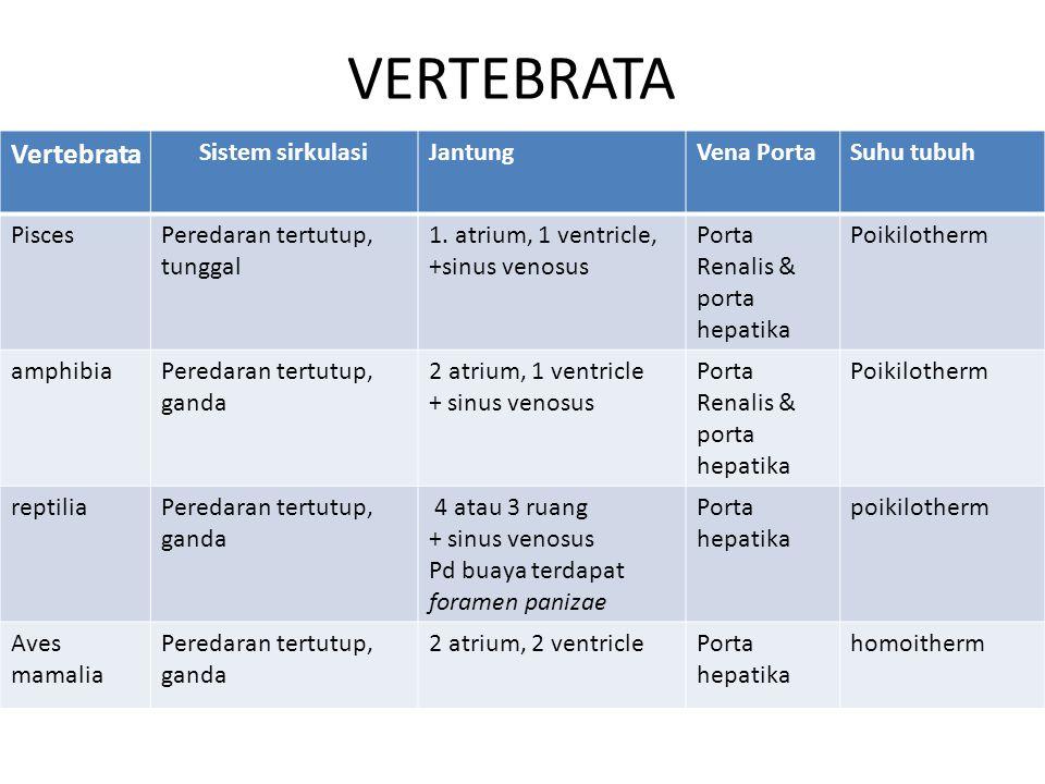 VERTEBRATA Vertebrata Sistem sirkulasiJantungVena PortaSuhu tubuh PiscesPeredaran tertutup, tunggal 1.
