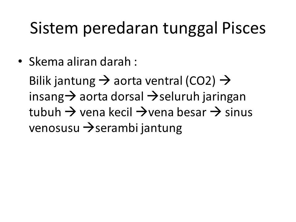 Sistem peredaran tunggal Pisces Skema aliran darah : Bilik jantung  aorta ventral (CO2)  insang  aorta dorsal  seluruh jaringan tubuh  vena kecil  vena besar  sinus venosusu  serambi jantung