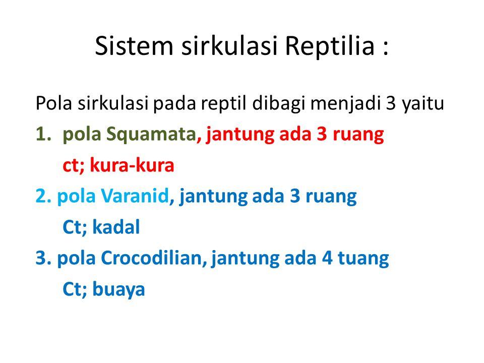 Sistem sirkulasi Reptilia : Pola sirkulasi pada reptil dibagi menjadi 3 yaitu 1.pola Squamata, jantung ada 3 ruang ct; kura-kura 2.