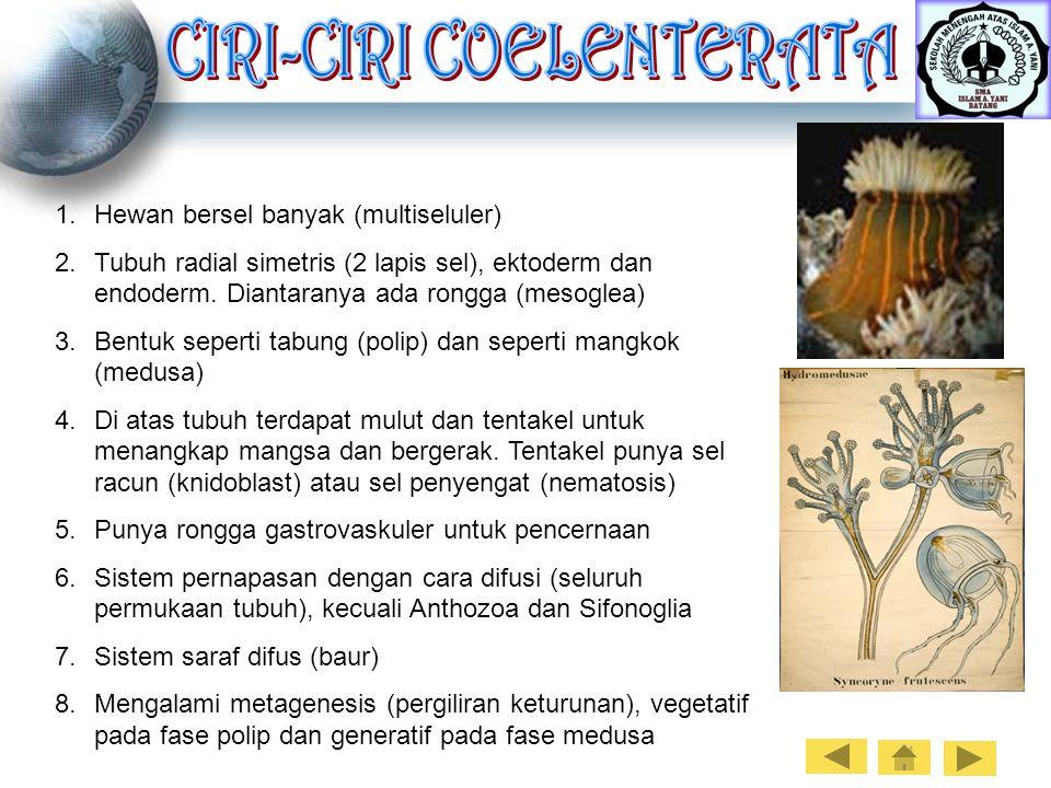 1.Hewan bersel banyak (multiseluler) 2.Tubuh radial simetris (2 lapis sel), ektoderm dan endoderm. Diantaranya ada rongga (mesoglea) 3.Bentuk seperti