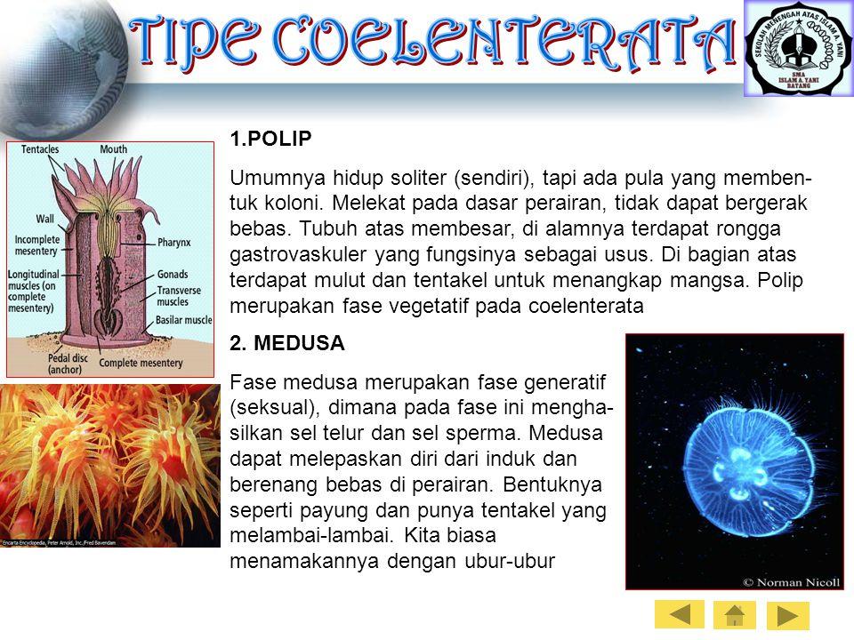 1.POLIP Umumnya hidup soliter (sendiri), tapi ada pula yang memben- tuk koloni. Melekat pada dasar perairan, tidak dapat bergerak bebas. Tubuh atas me