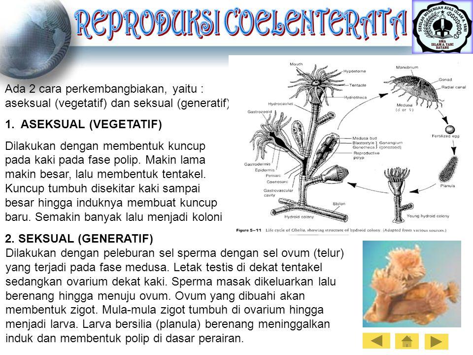 Ada 2 cara perkembangbiakan, yaitu : aseksual (vegetatif) dan seksual (generatif) 1. ASEKSUAL (VEGETATIF) Dilakukan dengan membentuk kuncup pada kaki