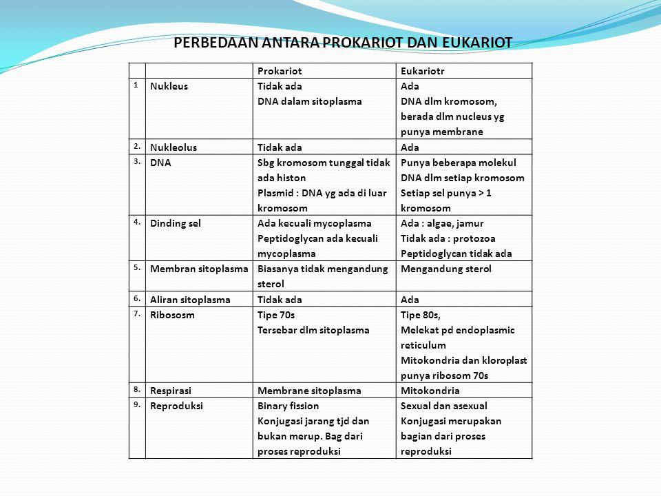 ProkariotEukariotr 1 Nukleus Tidak ada DNA dalam sitoplasma Ada DNA dlm kromosom, berada dlm nucleus yg punya membrane 2.