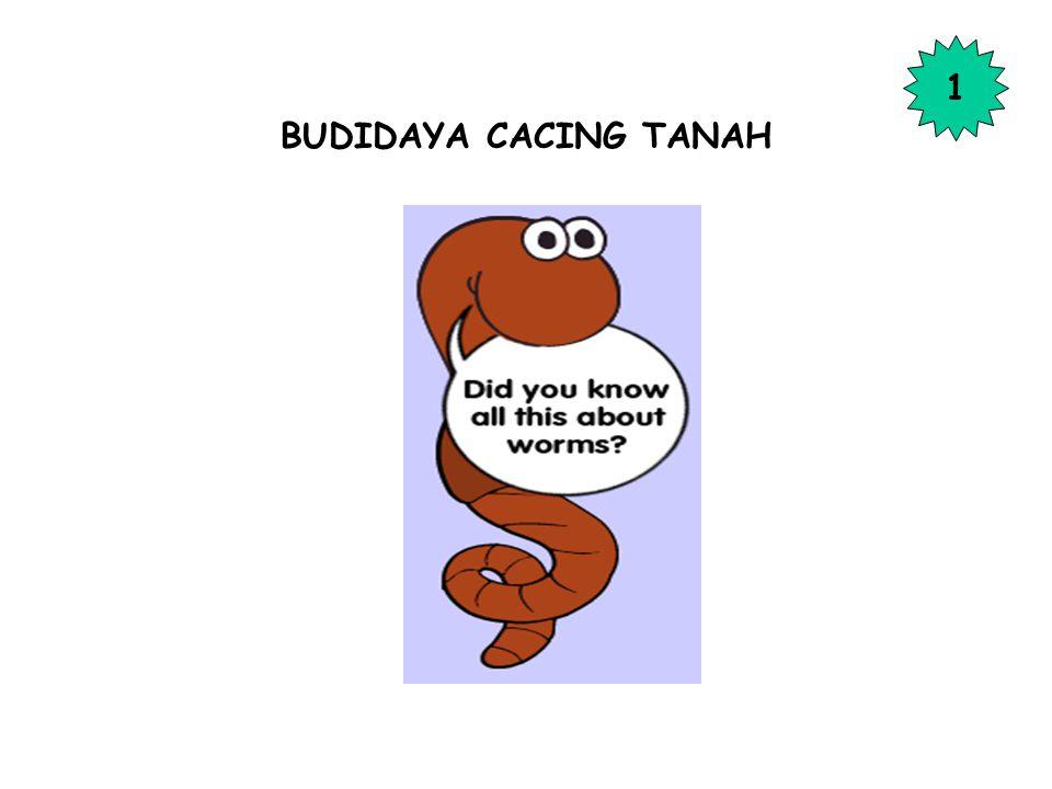 BUDIDAYA CACING TANAH 1