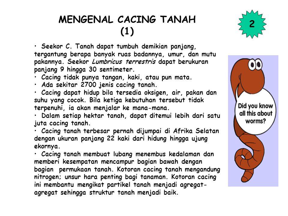MENGENAL CACING TANAH (1) Seekor C.