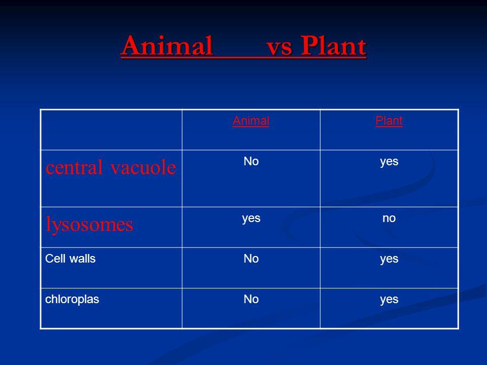 Animal vs Plant AnimalPlant central vacuole Noyes lysosomes yesno Cell wallsNoyes chloroplasNoyes