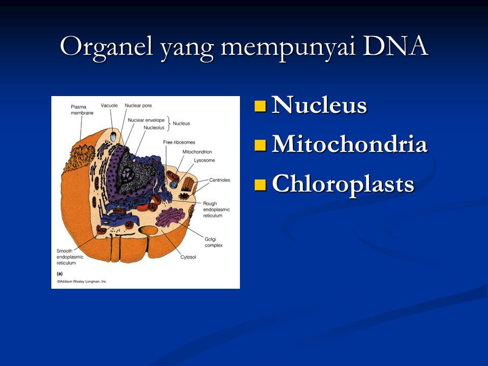 Organel yang mempunyai DNA Nucleus Nucleus Mitochondria Mitochondria Chloroplasts Chloroplasts