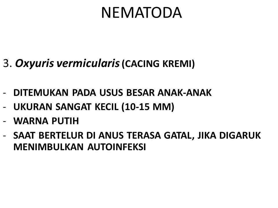 NEMATODA 3. Oxyuris vermicularis (CACING KREMI) -DITEMUKAN PADA USUS BESAR ANAK-ANAK -UKURAN SANGAT KECIL (10-15 MM) -WARNA PUTIH -SAAT BERTELUR DI AN