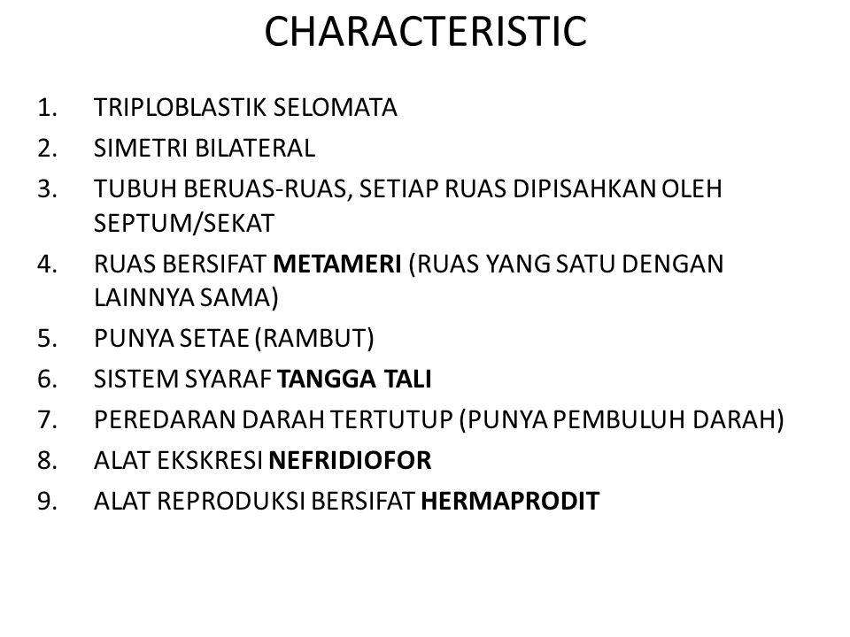 CHARACTERISTIC 1.TRIPLOBLASTIK SELOMATA 2.SIMETRI BILATERAL 3.TUBUH BERUAS-RUAS, SETIAP RUAS DIPISAHKAN OLEH SEPTUM/SEKAT 4.RUAS BERSIFAT METAMERI (RUAS YANG SATU DENGAN LAINNYA SAMA) 5.PUNYA SETAE (RAMBUT) 6.SISTEM SYARAF TANGGA TALI 7.PEREDARAN DARAH TERTUTUP (PUNYA PEMBULUH DARAH) 8.ALAT EKSKRESI NEFRIDIOFOR 9.ALAT REPRODUKSI BERSIFAT HERMAPRODIT