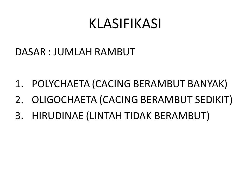 KLASIFIKASI DASAR : JUMLAH RAMBUT 1.POLYCHAETA (CACING BERAMBUT BANYAK) 2.OLIGOCHAETA (CACING BERAMBUT SEDIKIT) 3.HIRUDINAE (LINTAH TIDAK BERAMBUT)