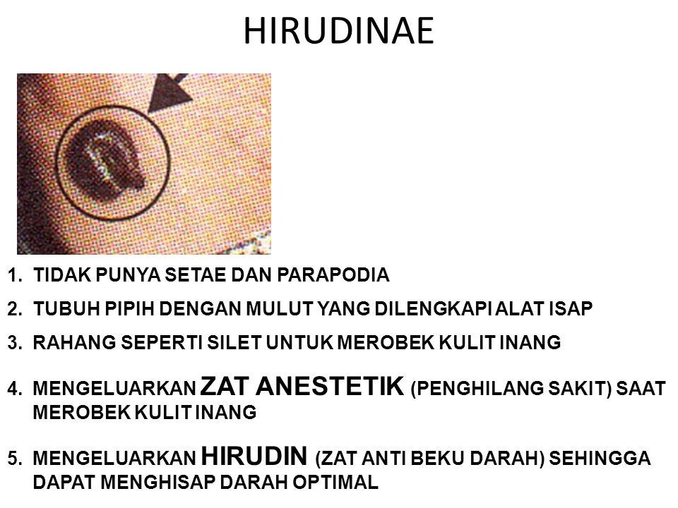 HIRUDINAE 1.TIDAK PUNYA SETAE DAN PARAPODIA 2.TUBUH PIPIH DENGAN MULUT YANG DILENGKAPI ALAT ISAP 3.RAHANG SEPERTI SILET UNTUK MEROBEK KULIT INANG 4.ME