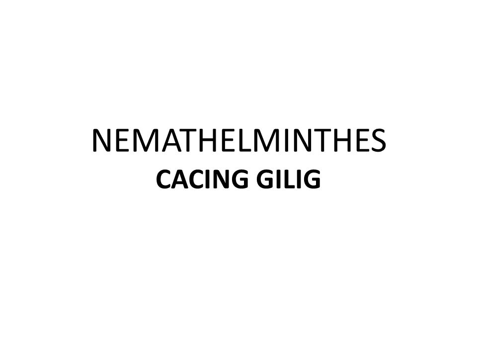 NEMATHELMINTHES CACING GILIG