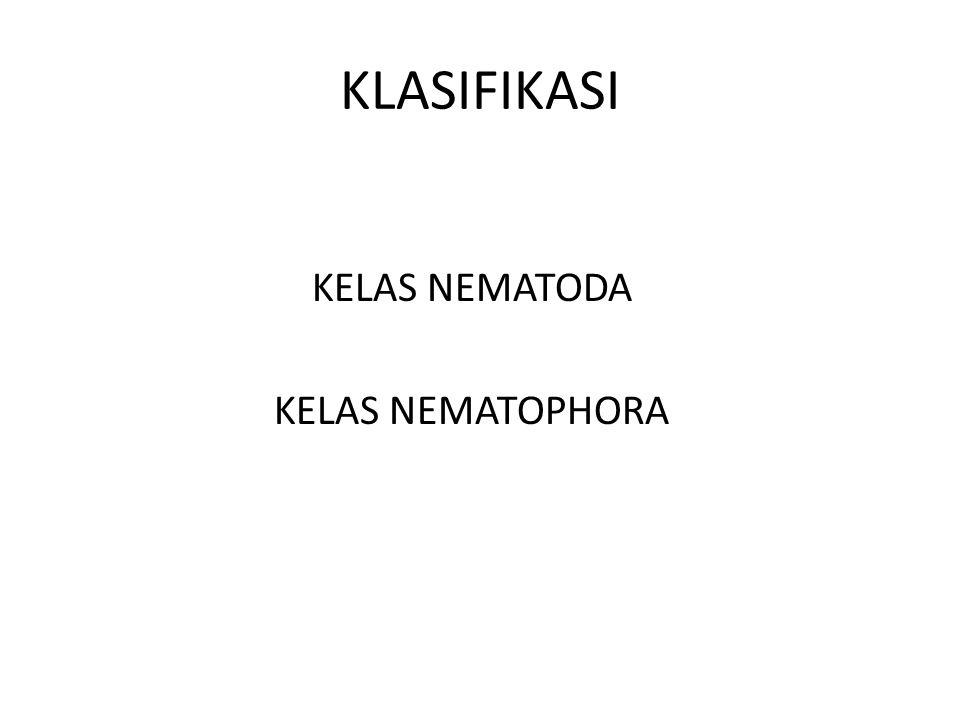 KLASIFIKASI KELAS NEMATODA KELAS NEMATOPHORA