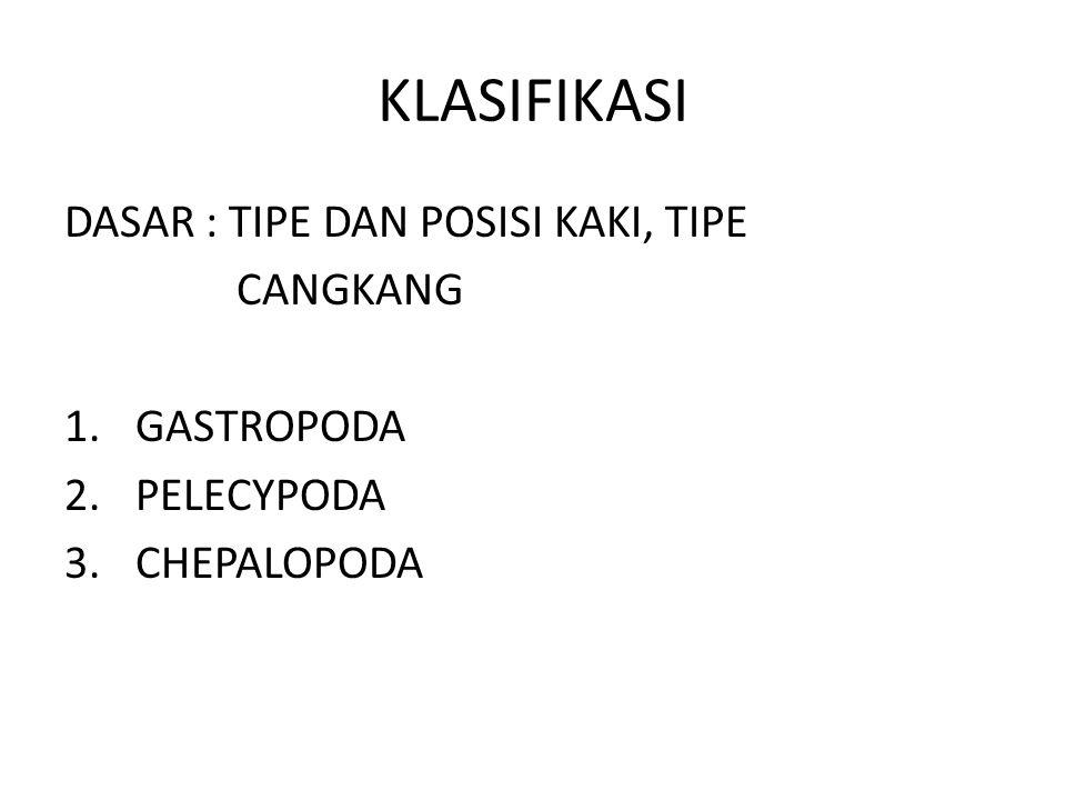 KLASIFIKASI DASAR : TIPE DAN POSISI KAKI, TIPE CANGKANG 1.GASTROPODA 2.PELECYPODA 3.CHEPALOPODA