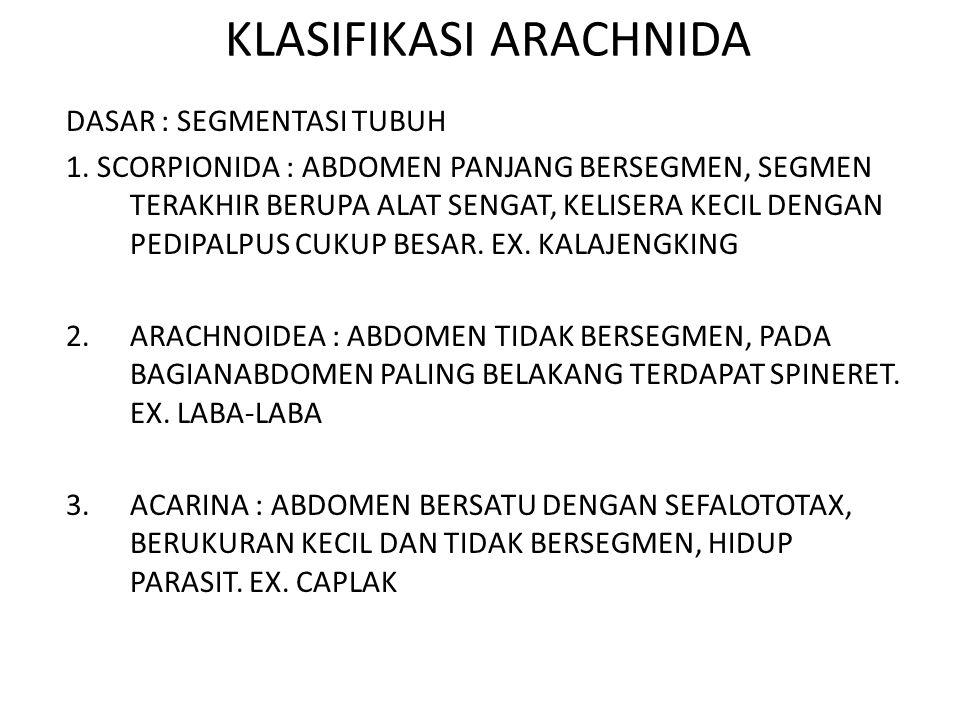 KLASIFIKASI ARACHNIDA DASAR : SEGMENTASI TUBUH 1. SCORPIONIDA : ABDOMEN PANJANG BERSEGMEN, SEGMEN TERAKHIR BERUPA ALAT SENGAT, KELISERA KECIL DENGAN P