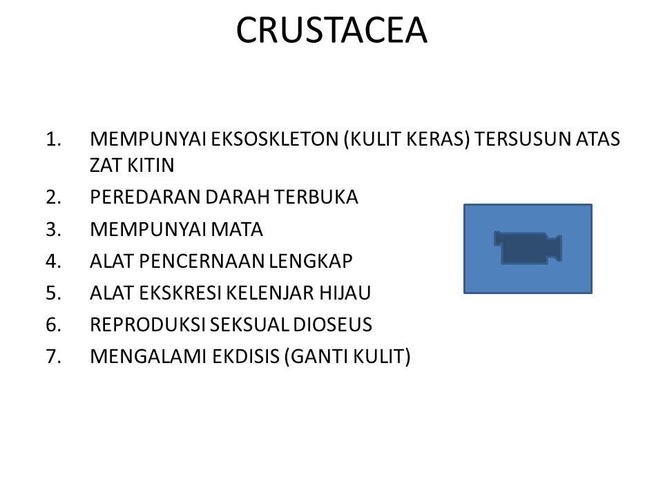 CRUSTACEA 1.MEMPUNYAI EKSOSKLETON (KULIT KERAS) TERSUSUN ATAS ZAT KITIN 2.PEREDARAN DARAH TERBUKA 3.MEMPUNYAI MATA 4.ALAT PENCERNAAN LENGKAP 5.ALAT EK