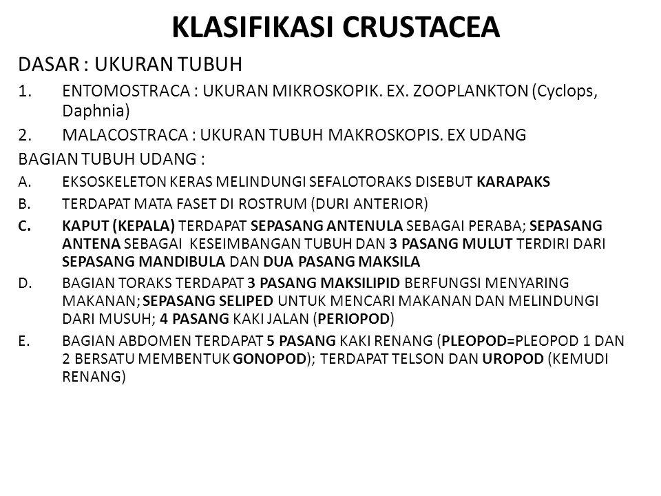 KLASIFIKASI CRUSTACEA DASAR : UKURAN TUBUH 1.ENTOMOSTRACA : UKURAN MIKROSKOPIK. EX. ZOOPLANKTON (Cyclops, Daphnia) 2.MALACOSTRACA : UKURAN TUBUH MAKRO