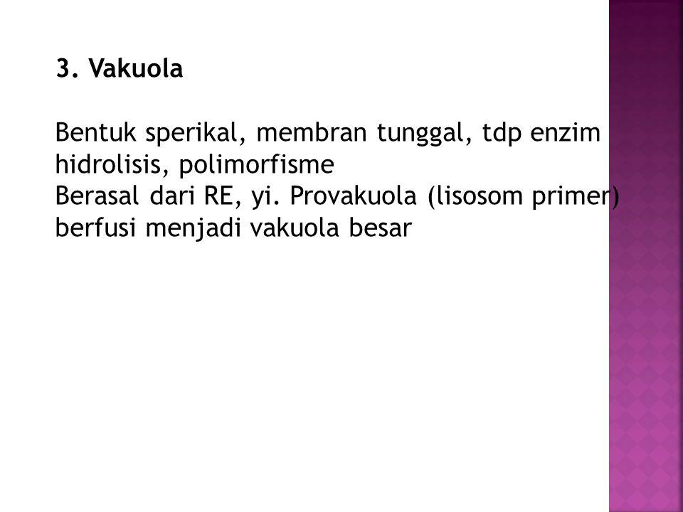 3. Vakuola Bentuk sperikal, membran tunggal, tdp enzim hidrolisis, polimorfisme Berasal dari RE, yi. Provakuola (lisosom primer) berfusi menjadi vakuo
