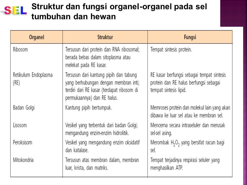 Struktur dan fungsi organel-organel pada sel tumbuhan dan hewan