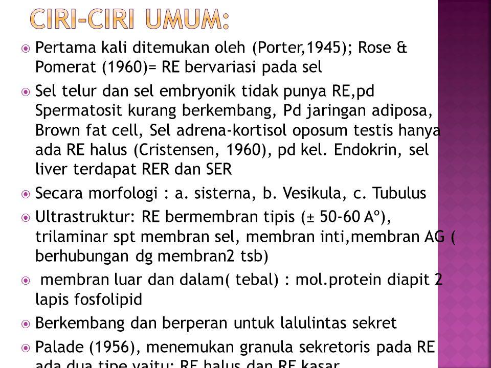  Membran RE = M.inti= m.plasma, pd Telophase ditemukan membentuk selubung inti (evaginasi m.inti)  Seikevitz & palade (1966), RER dibentuk dahulu, baru kemudian SER  Leskes et al ( 1971) dan Eytan&Ohad (1972), suatu sel punya membran lengkap dari induk dan tidak ada sintesis membran, jadi sel tumbuh dgekspansi membrannya  Enzim membran RE  Tdp banyak jenis enzim untuk sintesis: stearase,NADH-Sit.C Reduktase, NADH Diaphorase G-6-Phosfatase,Mg 2+ aktivasi ATPase, dll.