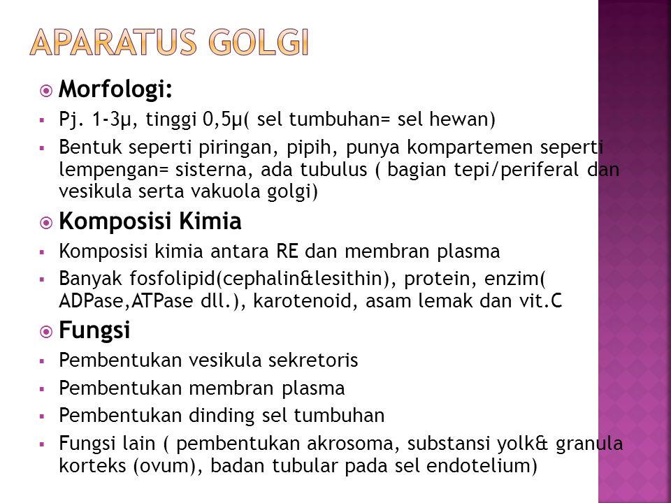  Morfologi:  Pj. 1-3μ, tinggi 0,5μ( sel tumbuhan= sel hewan)  Bentuk seperti piringan, pipih, punya kompartemen seperti lempengan= sisterna, ada tu