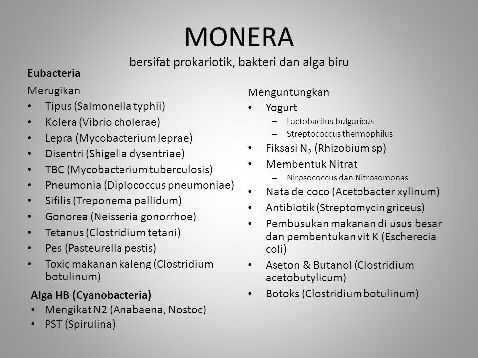 MONERA bersifat prokariotik, bakteri dan alga biru Merugikan Tipus (Salmonella typhii) Kolera (Vibrio cholerae) Lepra (Mycobacterium leprae) Disentri